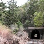Pines next to a tunnel entrance