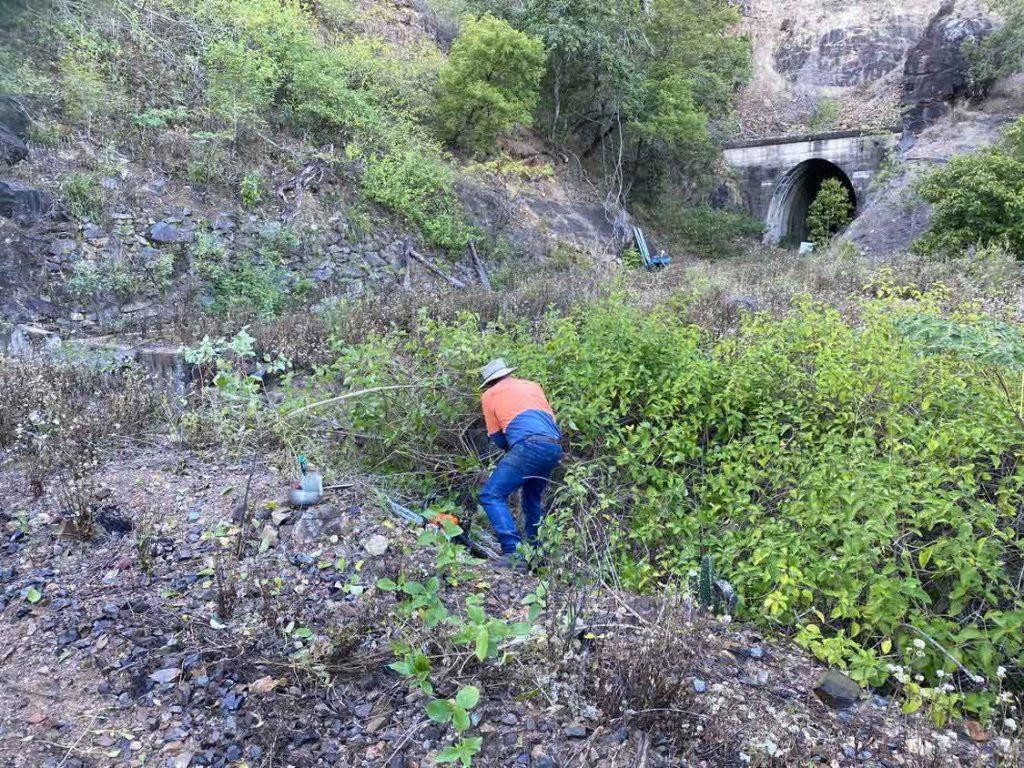 clearing lantana between tunnels on the Dawes Range